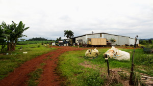Staking-op-de-boerderij-in-Australia
