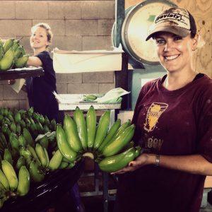 Lady-Finger-bananen-in-Australië