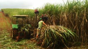 Suikerriet-werk-op-de-boerderij-in-Australië