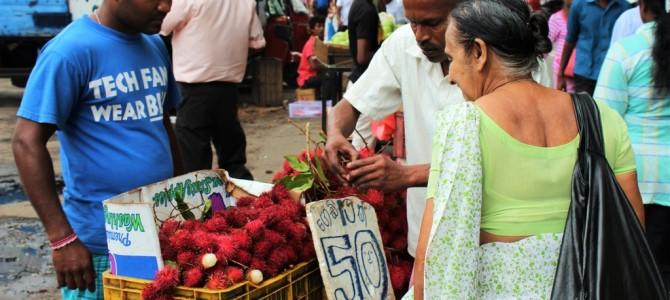 REISFILM | Rondreis Sri Lanka: divers, kleurrijk en relaxt