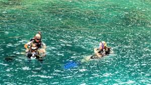 Mark Rescue Course