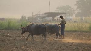 Veld ploegen Myanmar
