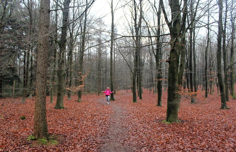 Pieterpad wandelen in de herfst