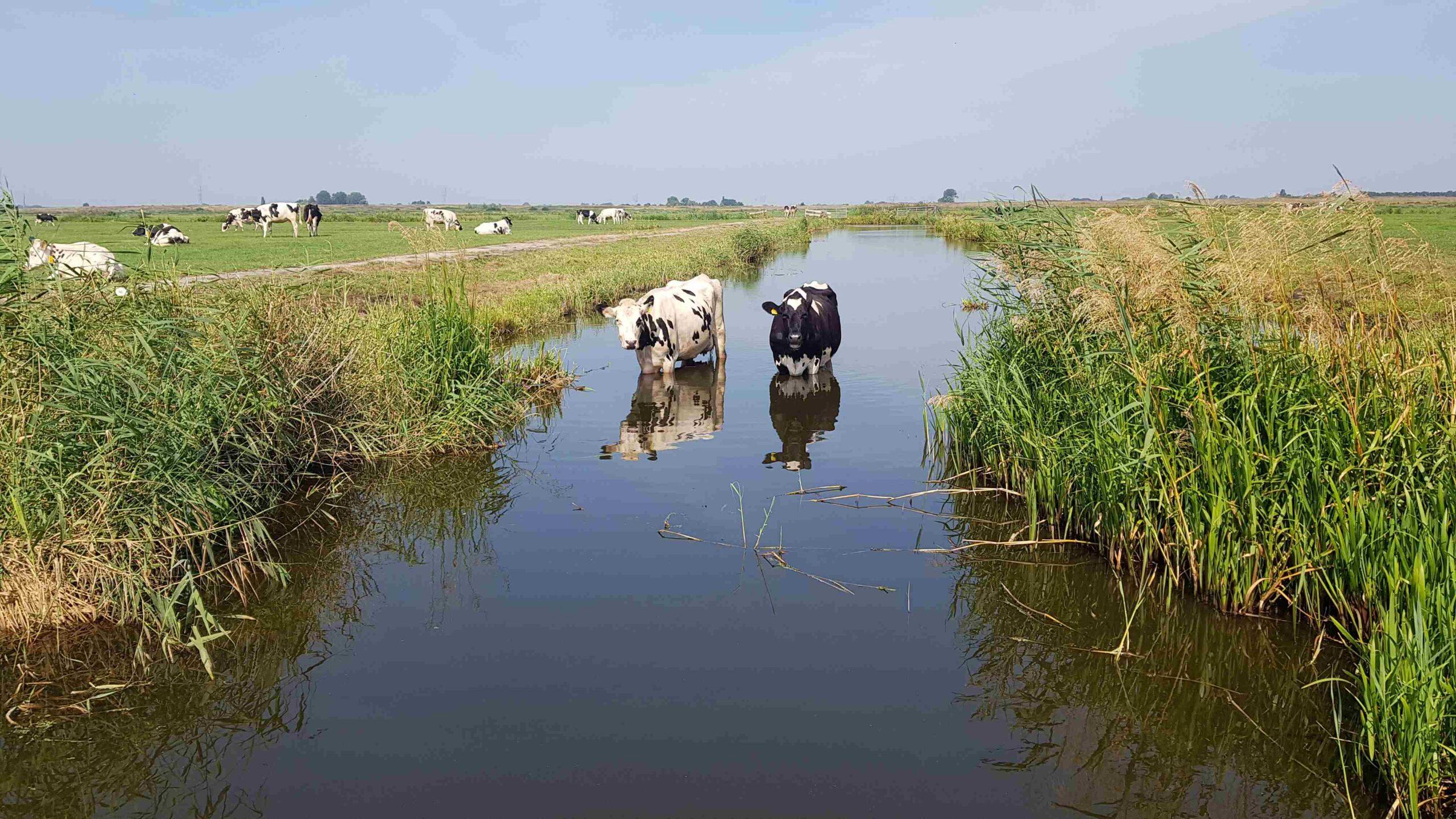 Trekvogelpad etappe 6: Broek in Waterland tot Amsterdam