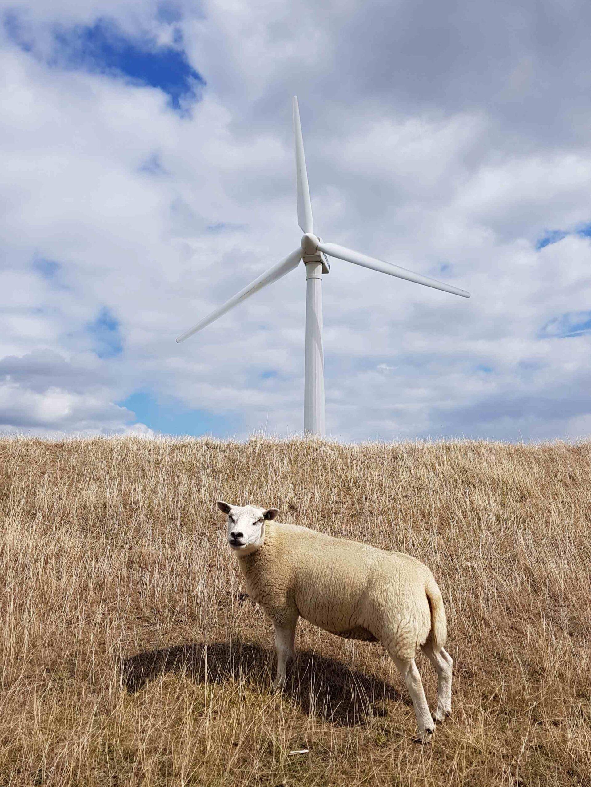 Rondje-Nederland-met-baby-schaap-en-windmolen-Zeeland