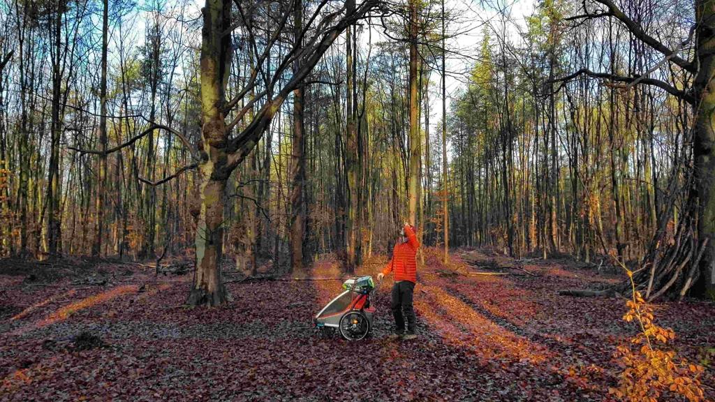 Trekvogelpad etappe 10, vogels luisteren op een rood bladerentapijt in het bos