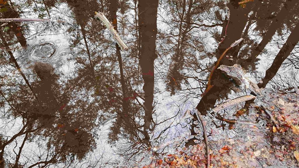 Trekvogelpad etappe 10, waterplas reflectie bomen