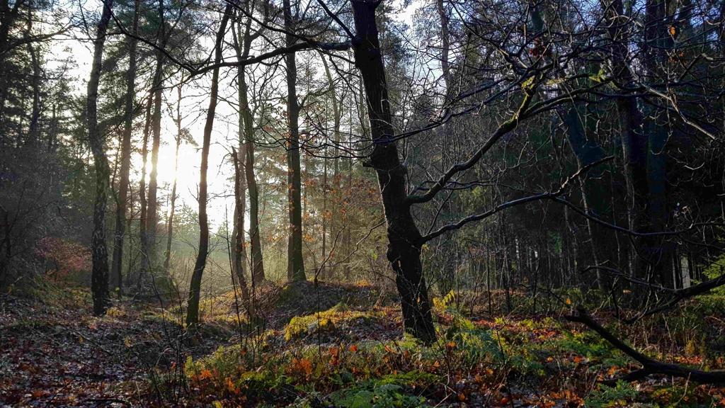 Trekvogelpad etappe 10, zonnestralen tussen de bomen