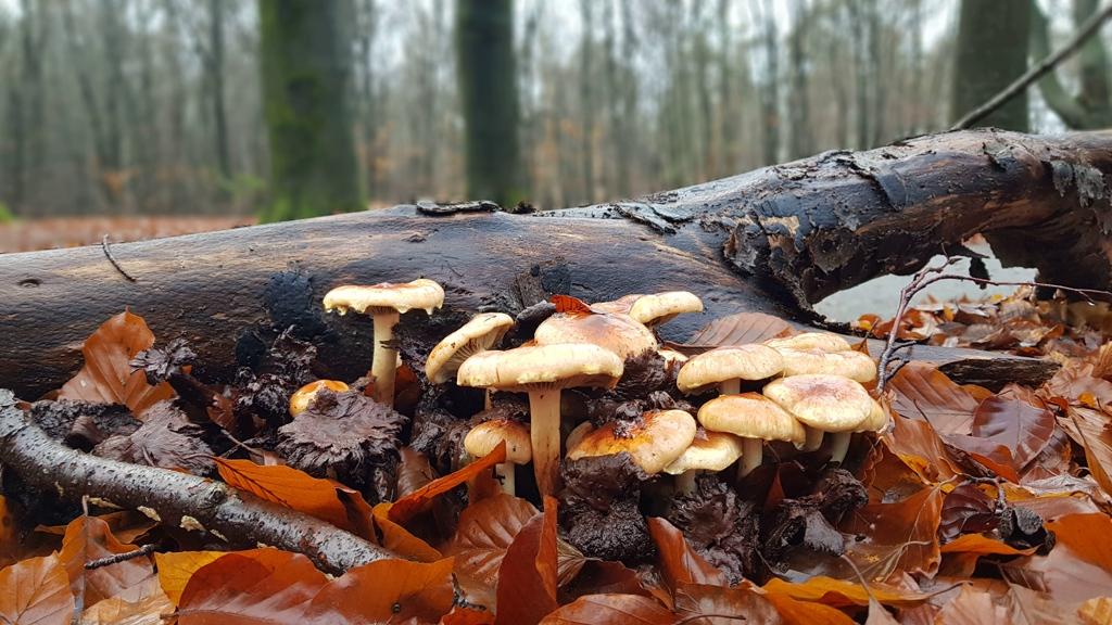 Trekvogelpad etappe 11 Soesterberg naar Maarn winter in het bos