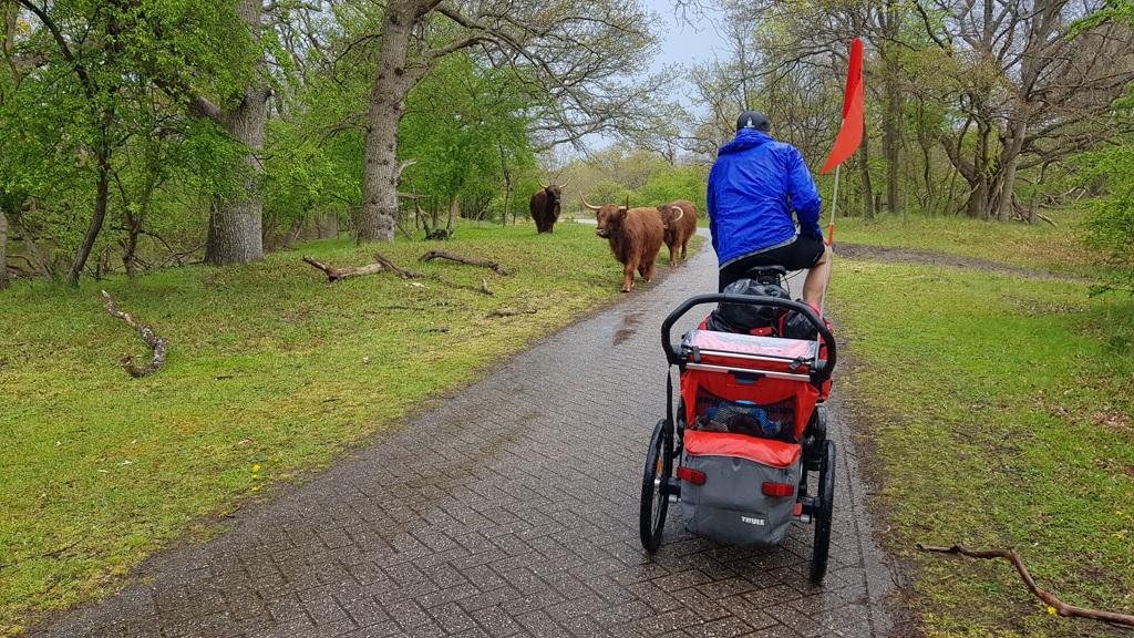 Ronde van Nederland op de fiets met baby Lotje, Hallo Schotse hooglanders