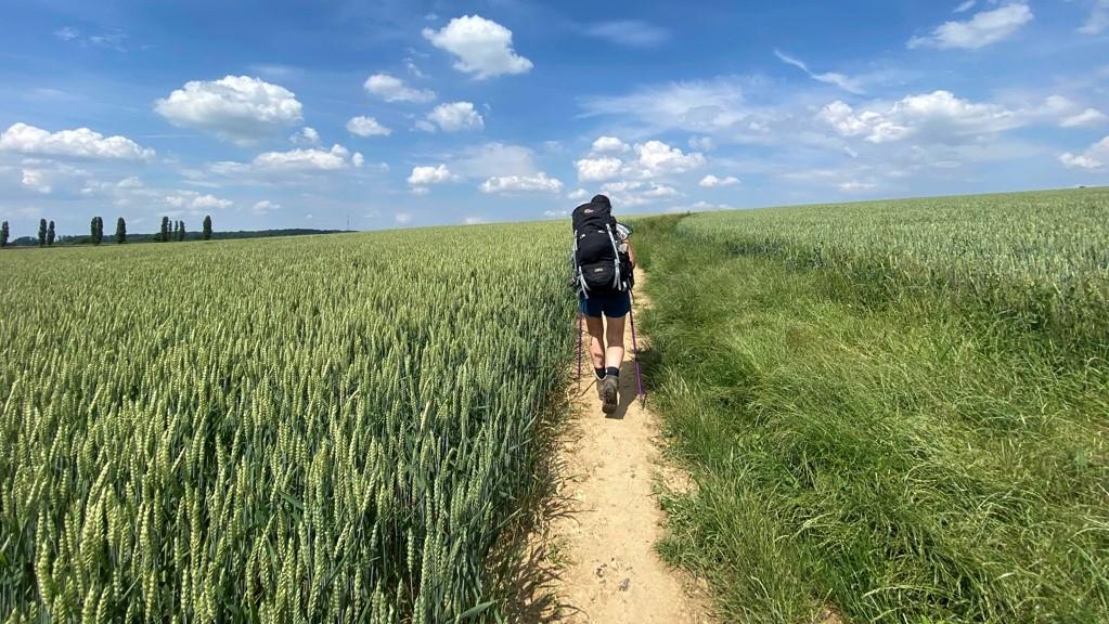DMT etappe 2 wandelen tussen tarwevelden