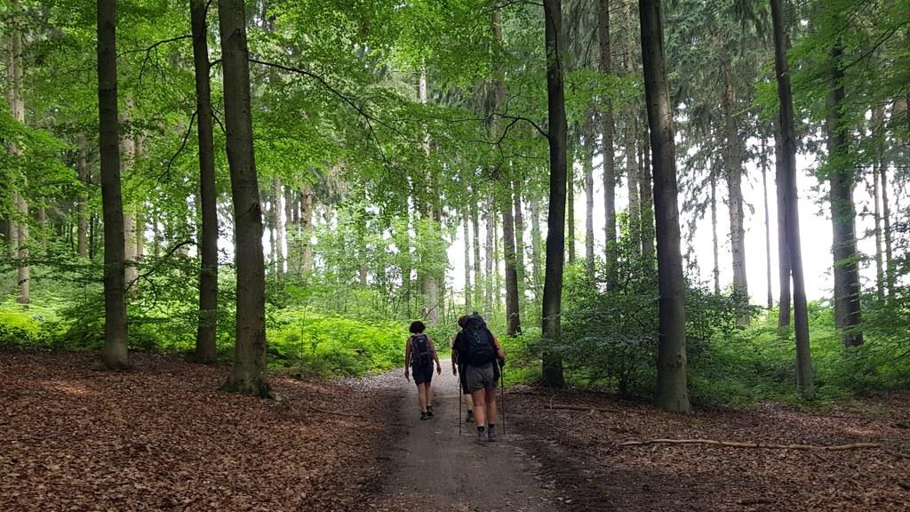 Dutch Mountain Trail etappe 2 Limburgse wandeldames