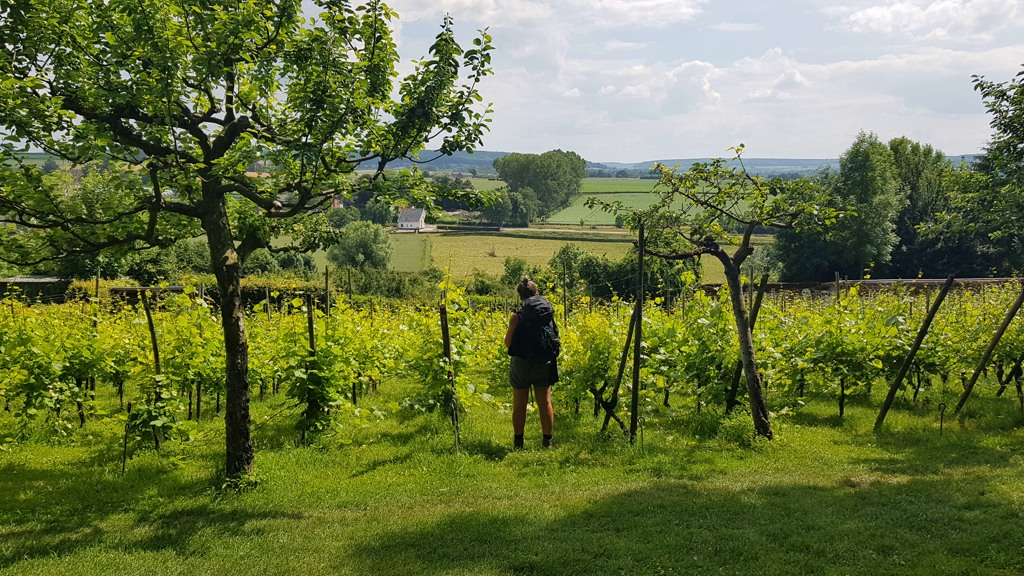 Dutch Mountain Trail etappe 2 Route des vins wijngaard