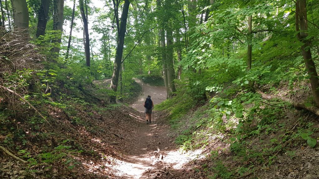 Dutch Mountain Trail etappe 3 wandelen door de bossen op weg naar summit vijf Hakkenberg
