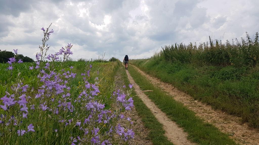 Dutch Mountain Trail etappe 3 wandelen over landweggetjes