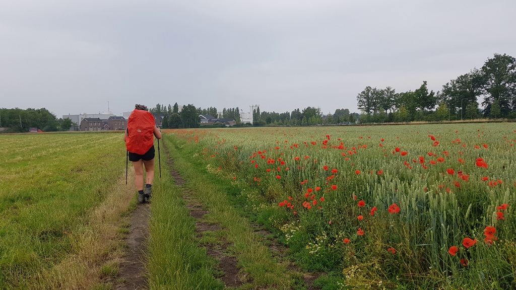 Dutch Mountain Trail etappe 4 klaprozen en regenbuien